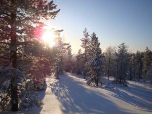 Psykologi Jyväskylä, Ympäristökriisi tunteet, Ympäristöahdistus, Psykologi Jyväskylä, Kestävä kehitys, Ekopsykologia, Ekososiaalinen hyvinvointi